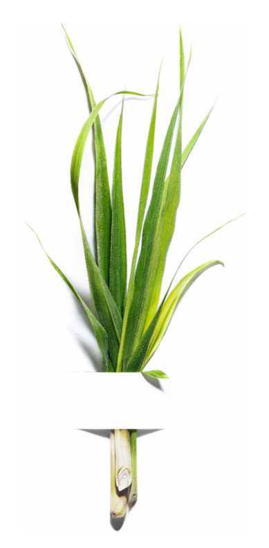Garnier Bio Lemongrass face care routine